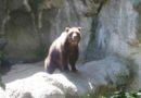 NAJAVILI KRAJ ZIME: Medvedi nisu videli senku