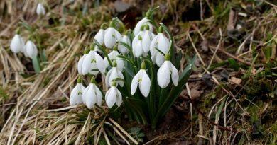 Danas počinje proleće, kazaljke pomeramo krajem marta