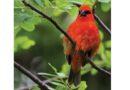 Izložba fotografija Vuka Labana u Domu kulture: Ptice svih boja