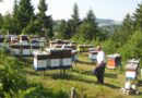 Kraj košnica nema mesta za mrzovoljne: Kako sa 427 evra krenuti u proizvodnju meda