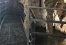 Stopića pećina lepša i uređenija sa novim stazama