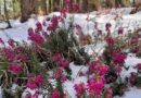 Susret zime i proleća na Tari
